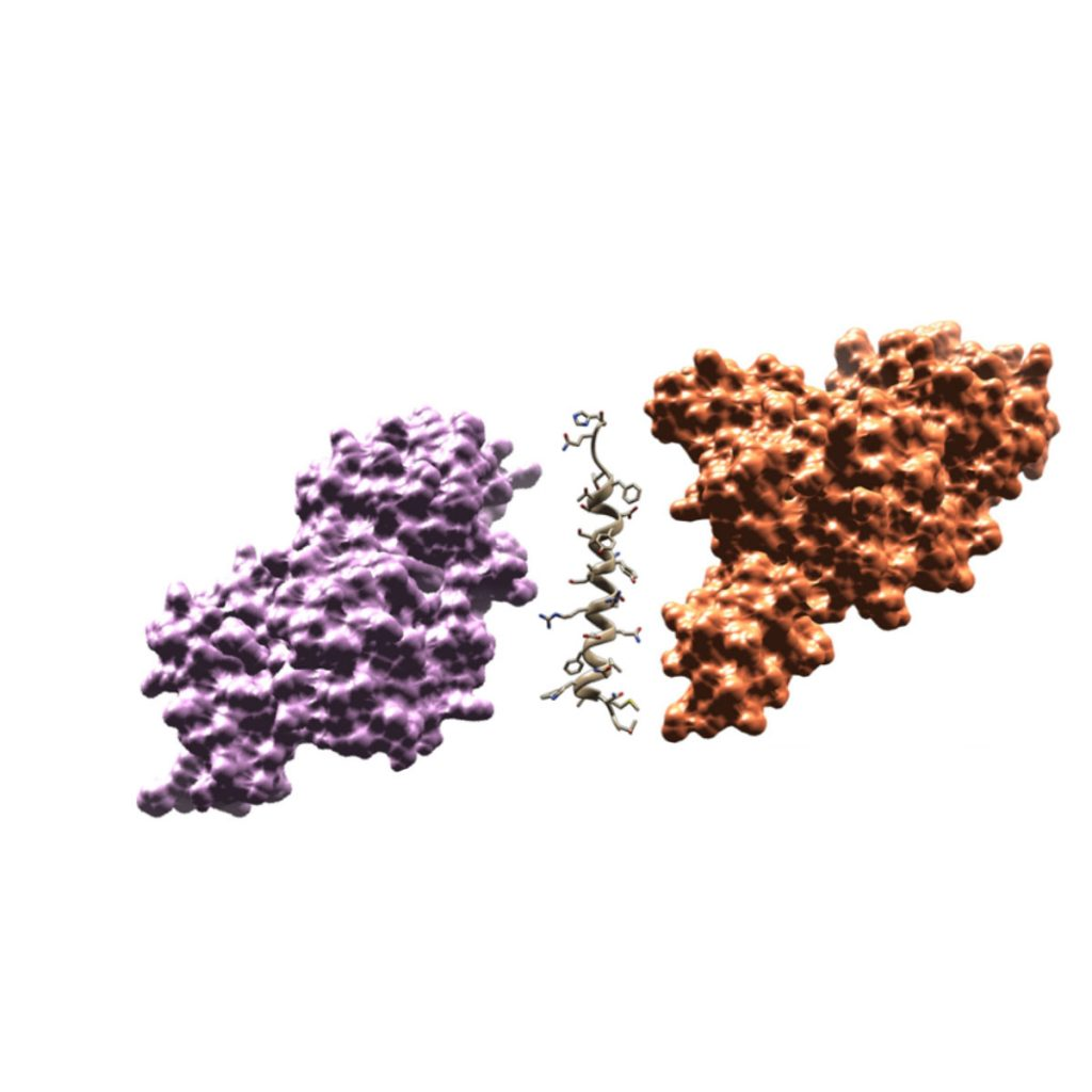 Photoredox catalysis, peptide therapeutics, biologics, targets, drug discovery, Pharma, Pharma, Bloom, Steve Bloom, The Bloom Group, KU, Science, Peptides, research, unnatural amino acids, peptide libraries, biocompatible photocatalysts, tethering biomolecules, chemotherapeutics, photochemical strategies, fusion proteins, antibody conjugates, bi-specific peptides, light activated molecules, electron oxidation, synthetic radical intermediates, therapeutic scaffolds, medicinally relevant compounds, bio-derived therapeutics, small cell lung cancer, viral capsid, improved therapeutics,